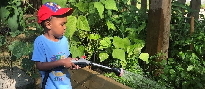 A young Black child in a blue t-shirt and red baseball cap carefully waters plants in a raised bed